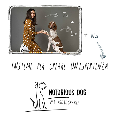Layout_Notorious-Dog-